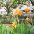 オレンジ色の花(ラン?)