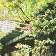 アーケードに咲くブーゲンビリア