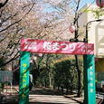 緑道公園の桜まつり