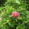 花園の赤い花